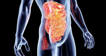 Jelita probiotyki